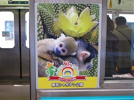 伊豆急電車-3