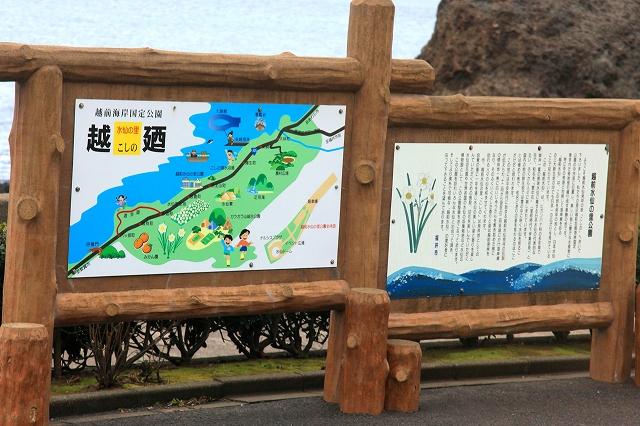 越前水仙の里公園-4
