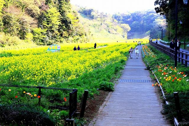 くりはま花の国-4