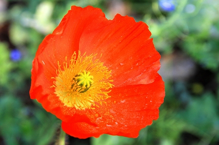くりはま花の国-7