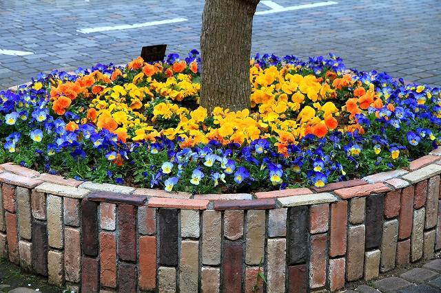 くりはま花の国-8