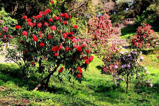 くりはま花の国-10