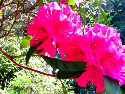 くりはま花の国-11