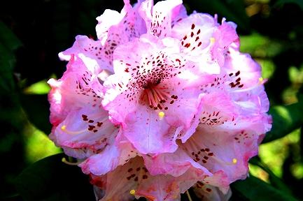 くりはま花の国-12
