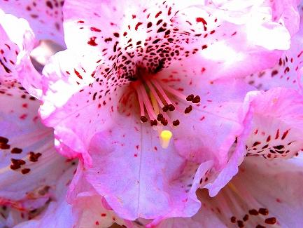 くりはま花の国-13