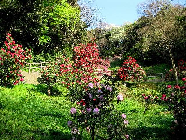 くりはま花の国-9
