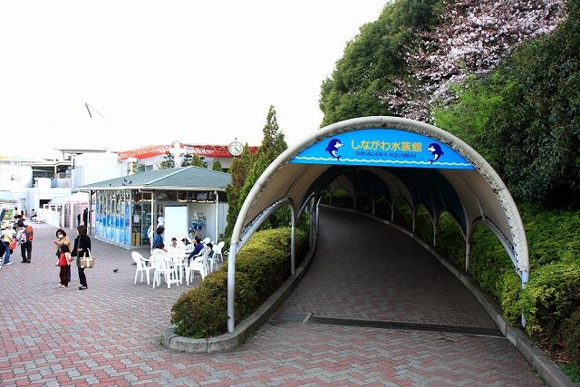 しながわ水族館-2
