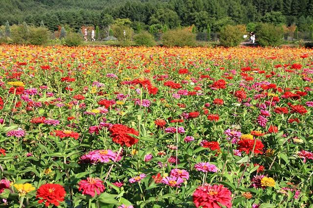 花の都公園-3