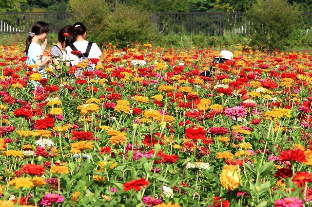 花の都公園-4