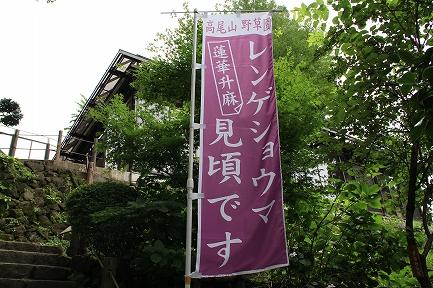 高尾山-6