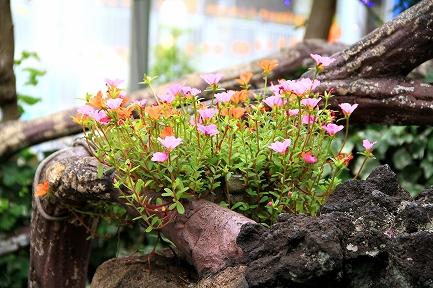 花やしき-3