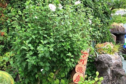 花やしき-9
