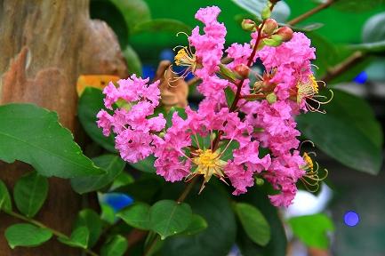 花やしき-7