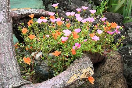 花やしき-8