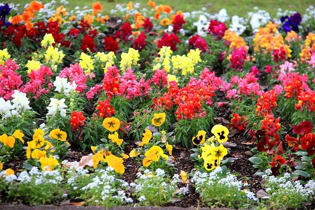 大道芸会場に美しい花