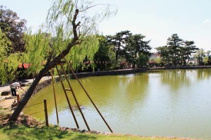 猿沢池-5