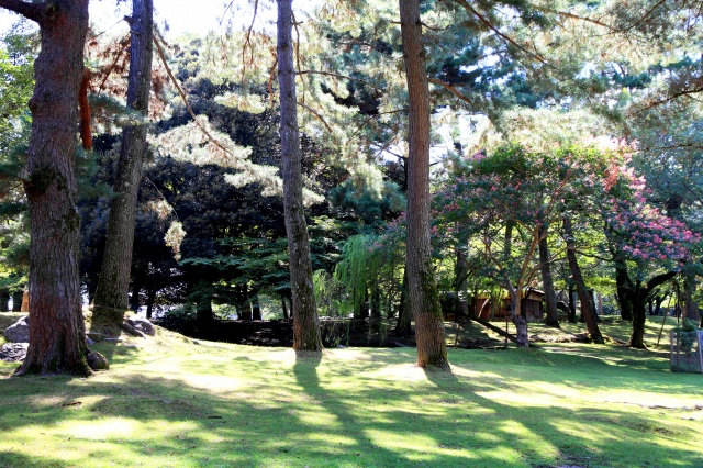 奈良公園-1