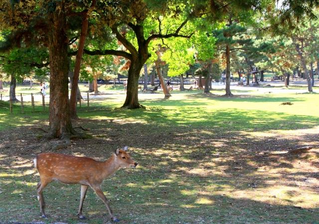 奈良公園-2