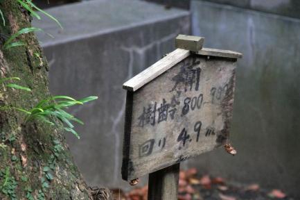 柳川-10