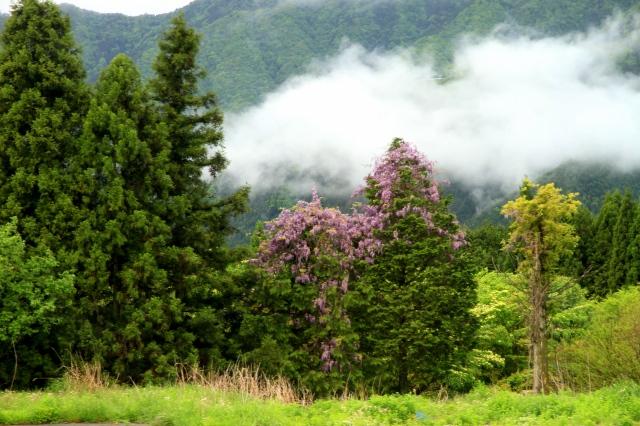 朝霧高原-1