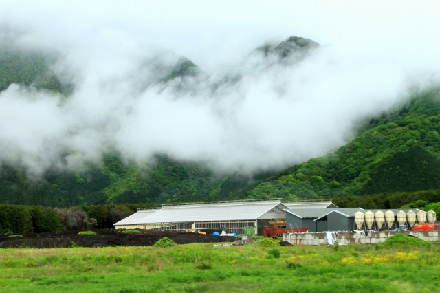 朝霧高原-2
