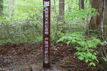 神社参道-4