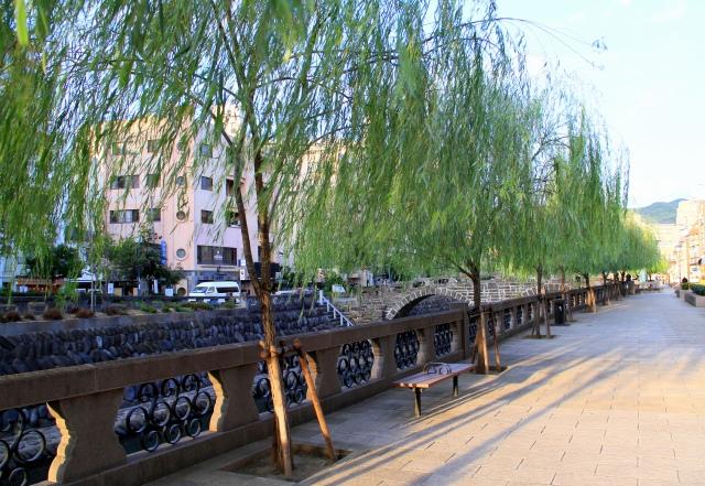 美しい枝垂れ柳