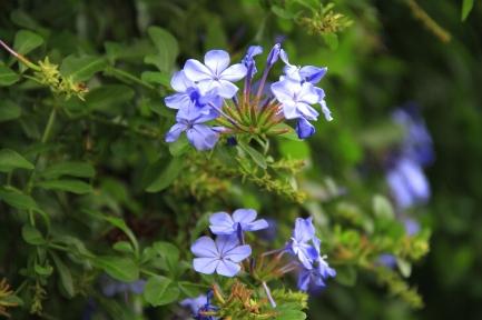 道端に咲く花-1