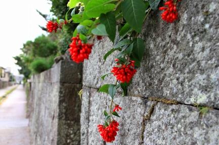 石垣に咲く花-1