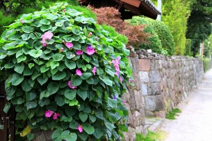 石垣に咲く花-2