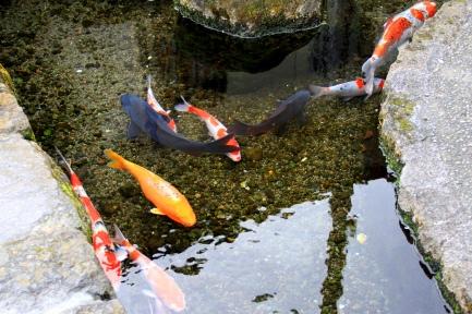 鯉の泳ぐまち-5