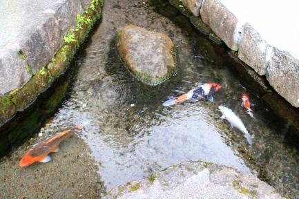 鯉の泳ぐまち-6