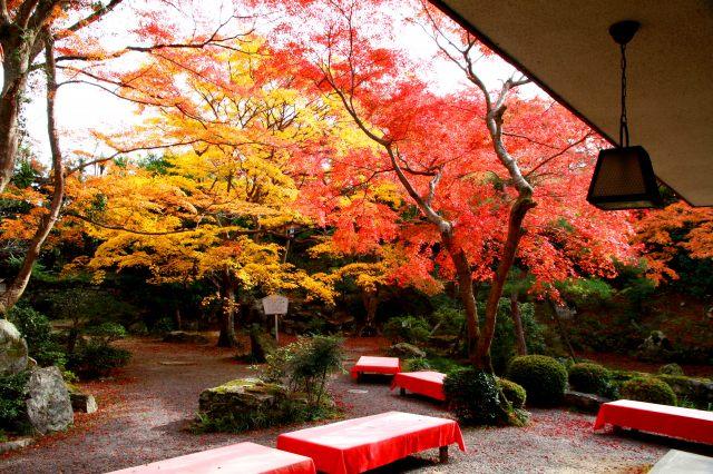 芙蓉園本館庭園の紅葉