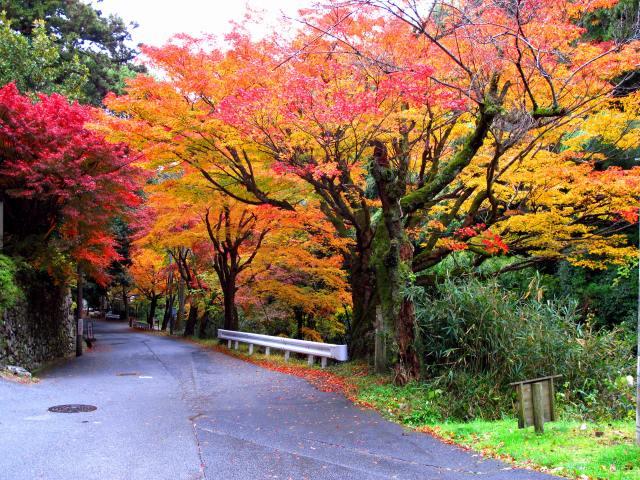 坂本・藤ノ木川沿いの紅葉