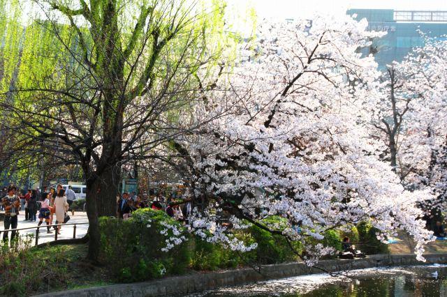 上野公園-11