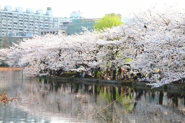 上野公園-14