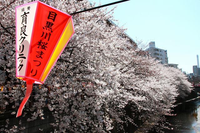 目黒川の桜-2