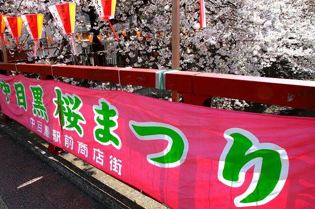 目黒川の桜-3