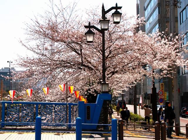 目黒川の桜-4