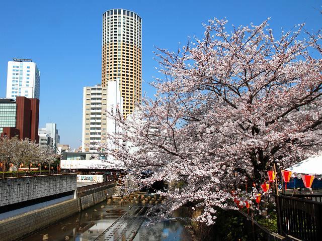 目黒川の桜-5