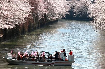 目黒川の桜-15