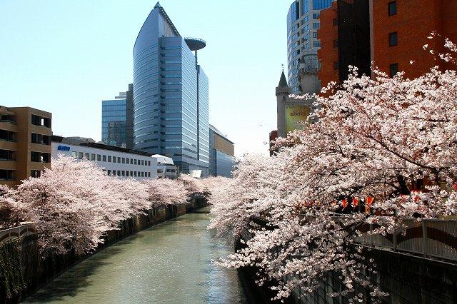 目黒川の桜-17