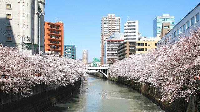 目黒川の桜-16