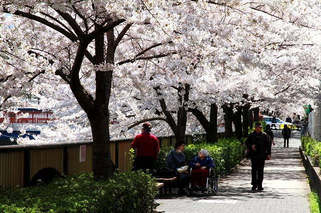 目黒川の桜-9