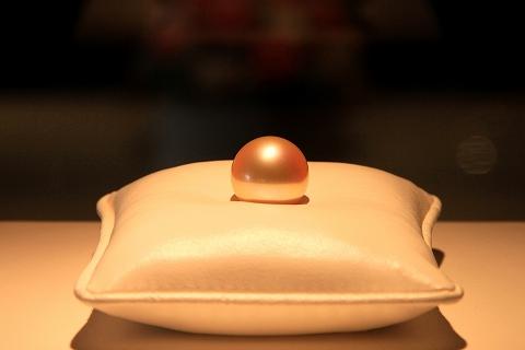 シロチョウガイ真珠-1