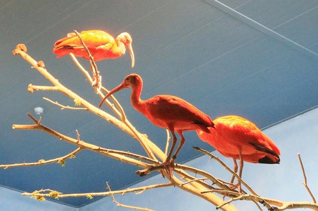 鳥羽水族館-12
