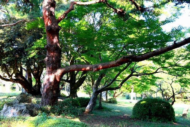 倉田山の庭園