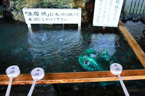 二見蛙-6