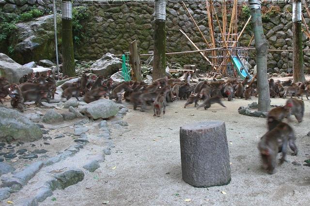 高崎山-5