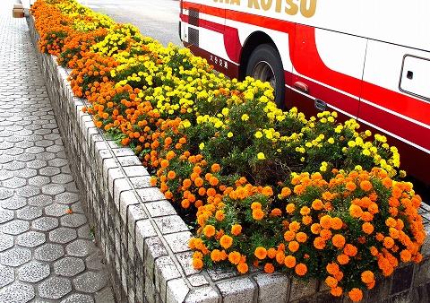 きれいな花壇
